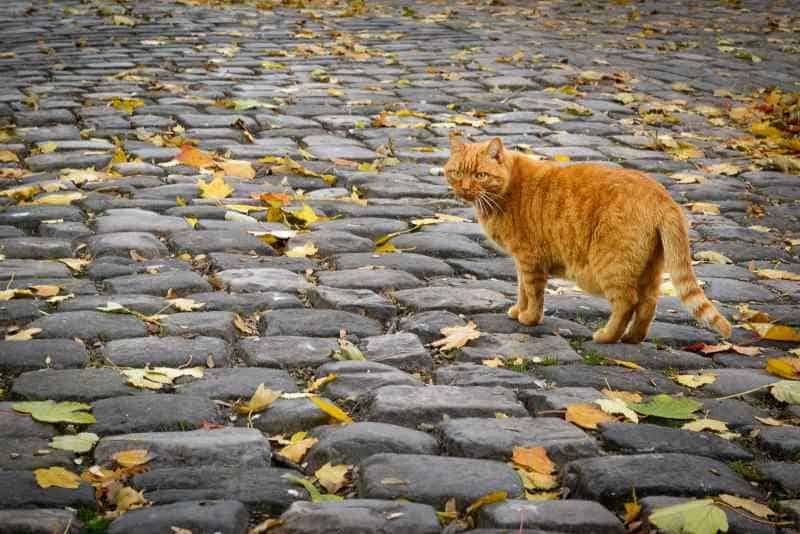 A Cat in the streets of Montmartre
