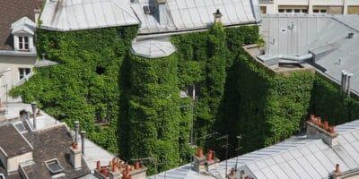Green Notre Dame Paris