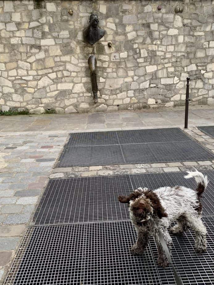 Bringing your pet to Paris