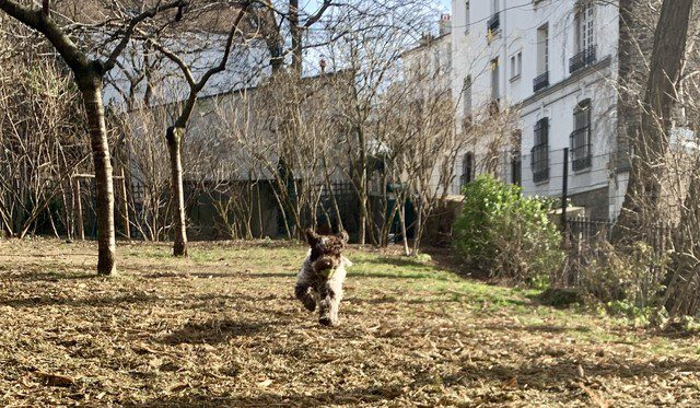 Dog playing in Paris park