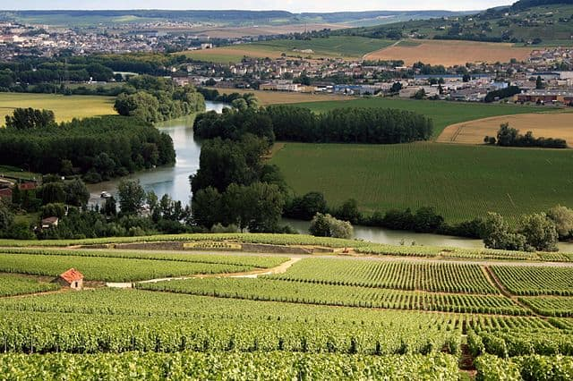 Vineyards in the Champagne region of France