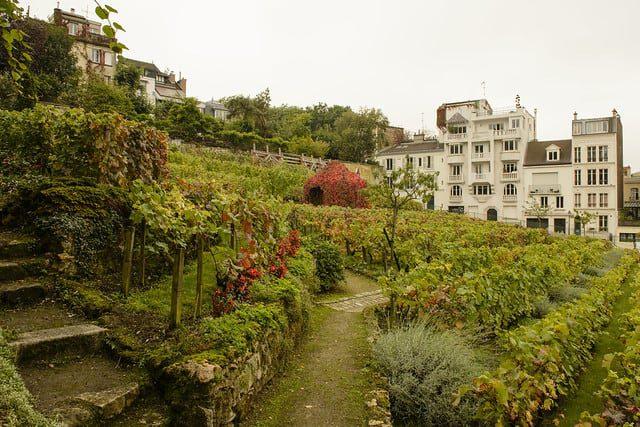 Clos Montmartre vineyard