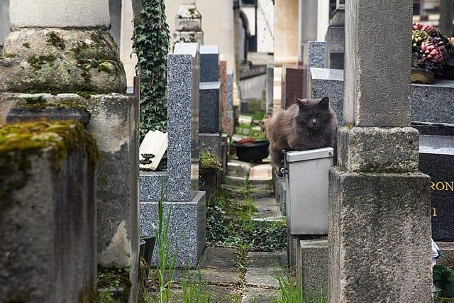 Cat in Montmartre Cemetery