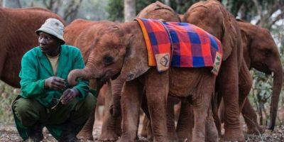 David Sheldrick Wildlife Trust in Nairobi