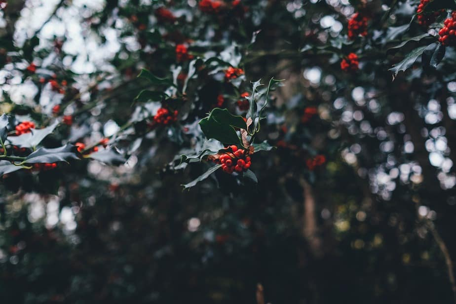 5 Portuguese Christmas Traditions That You Didn't Know 1